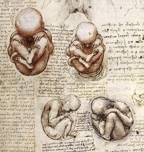 fetus2