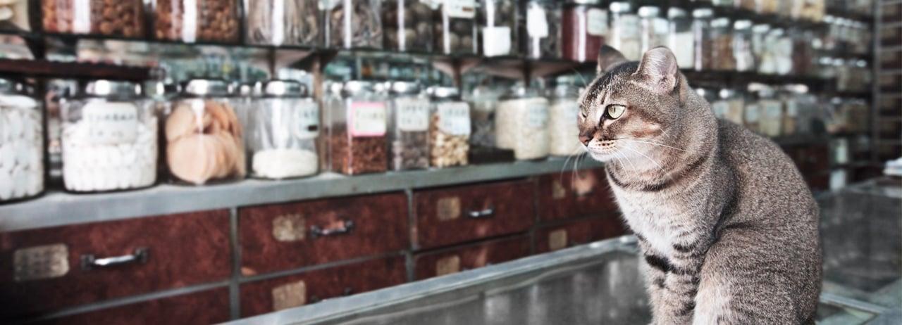 ¿Medicina alternativa para mascotas?