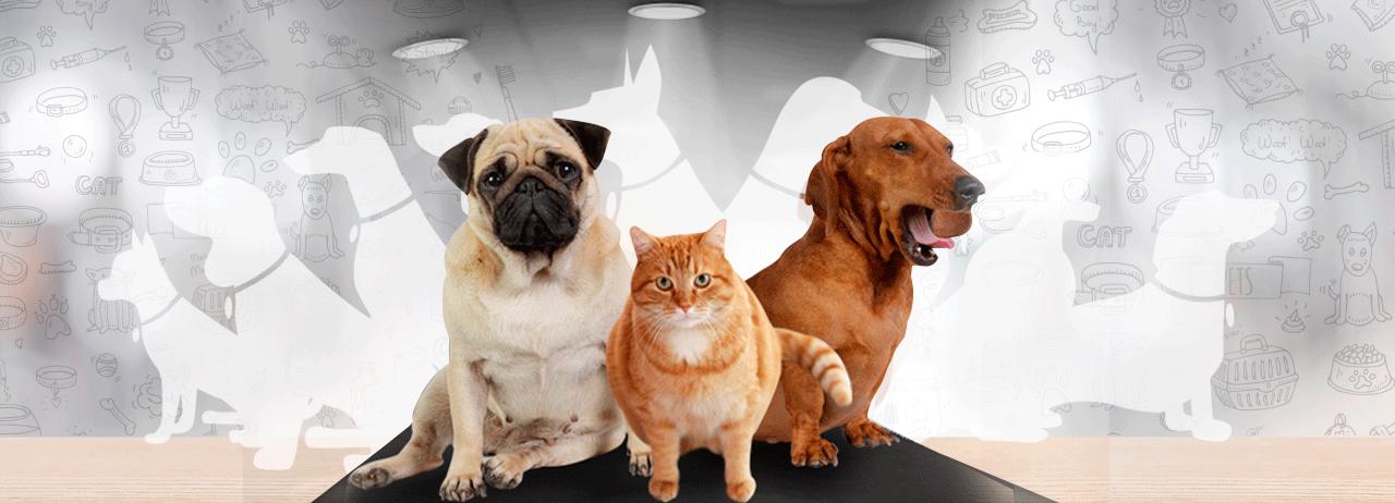Cuida la alimentación de tu mascota como una muestra de amor