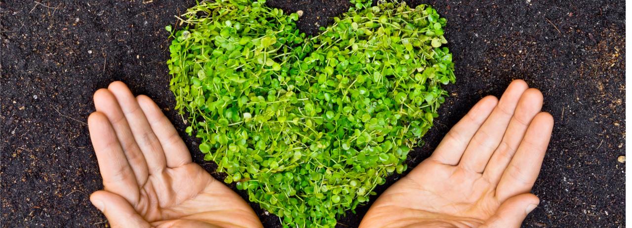 10 acciones para ser más eco-friendly